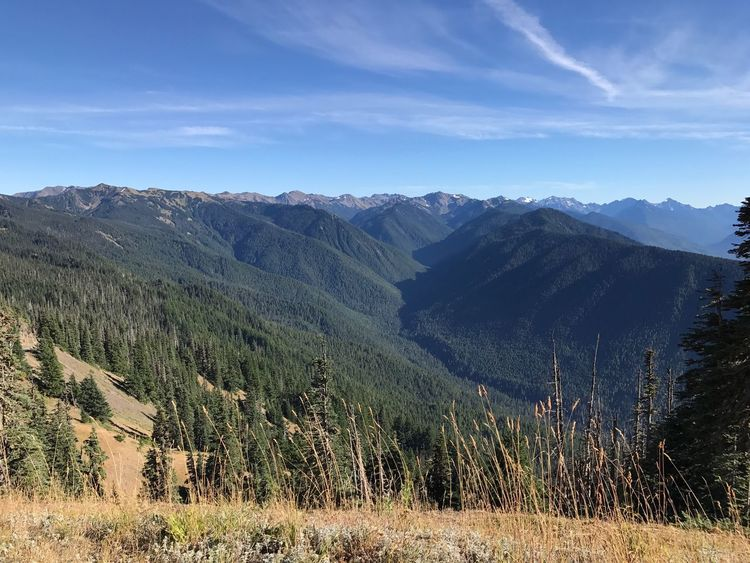 View from hurricane Ridge in Olympic national Park Premium Collection Mountain Range Mountain Nature Beauty In Nature Tranquil Scene Tranquility Sky Landscape No People Scenics Day Outdoors Go Higher
