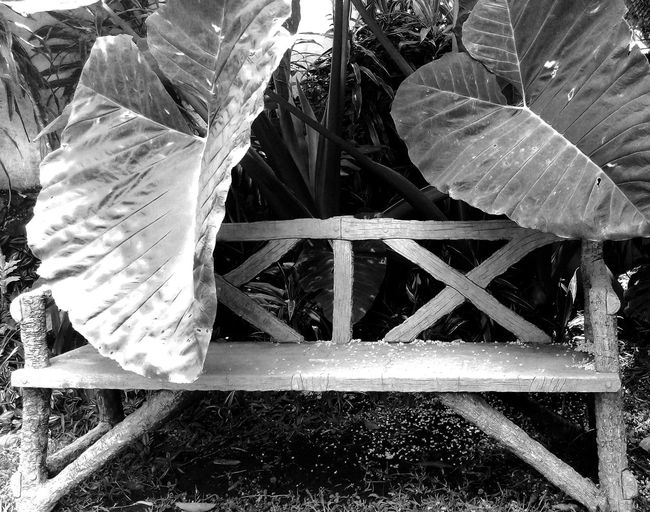 Take a break in Cuernavaca, Mexico Bench Fronds Tranquil Black And White Photography Close-up Day Freshness Growth Large Leaves Leaf Nature No People Outdoors Plant Resting Selfie Water