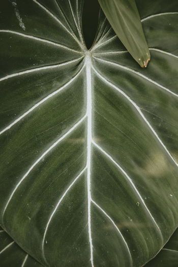Green Color Leaf Plant Part Plant Growth No People Full Frame Close-up Pattern Beauty In Nature Nature Leaf Vein Natural Pattern Backgrounds High Angle View Outdoors Directly Above Day Leaves Green Color Creek Nature