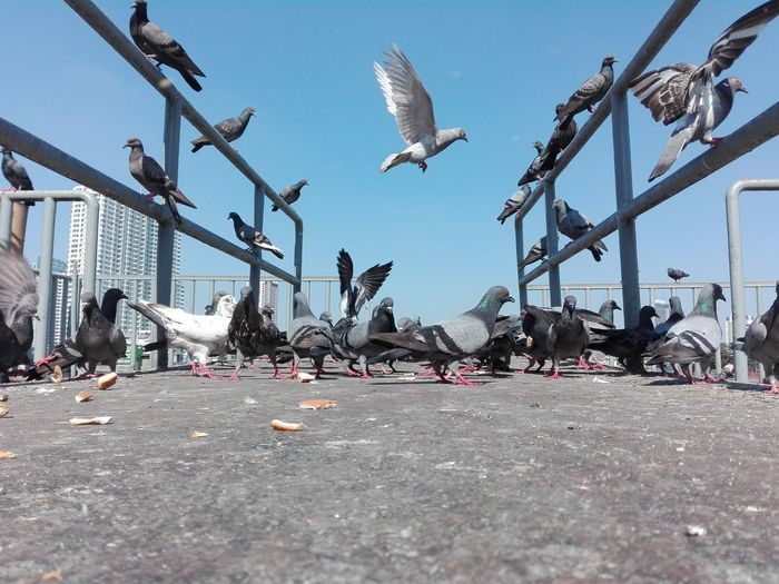 Surface level shot of pigeons in city against sky