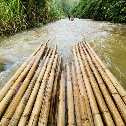 Wooden raft on river amidst trees