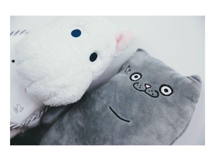Moomin Cat Pakho 周柏豪 Still Life Clothing Indoors