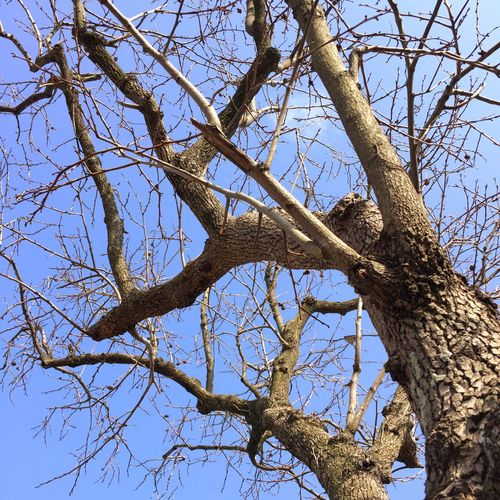 old tree Sky