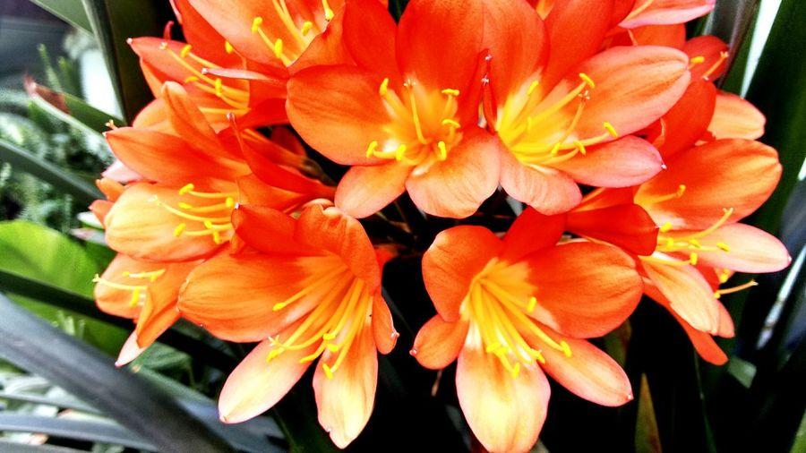 Orangeyellowhith
