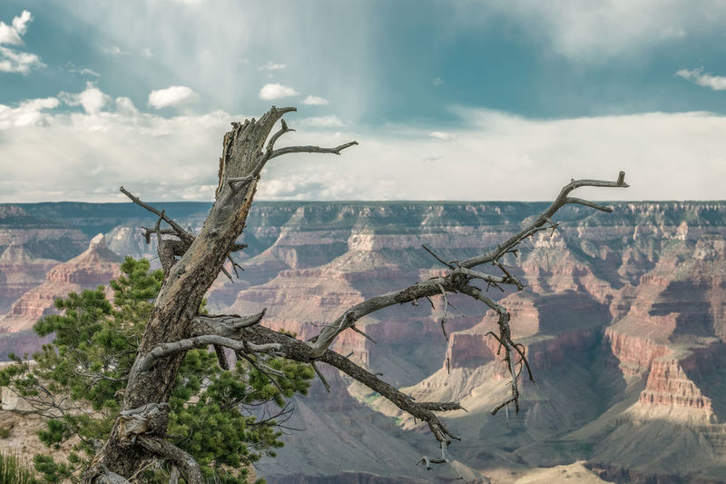Scenic View Of Tree Against Sky And Grand Canyon
