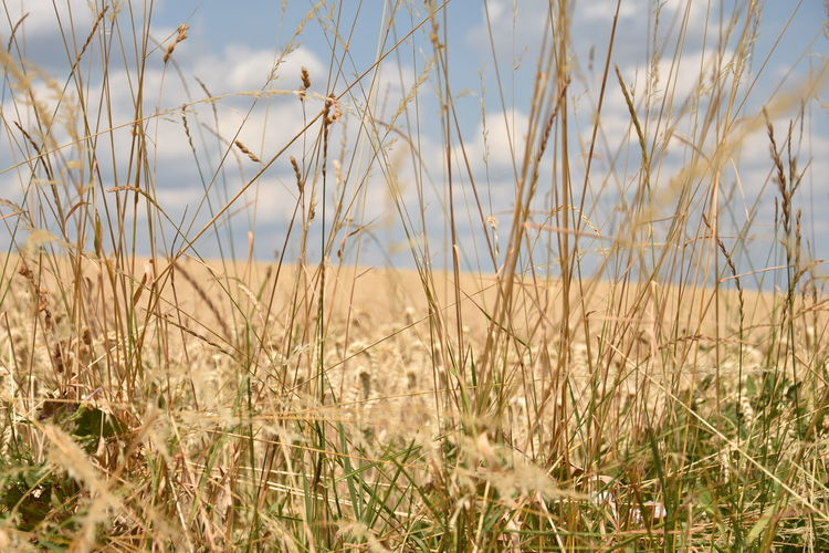 Beauty In Nature Close-up Day Environment Field Grass Growth Land Landscape Marram Grass Nature No People Non-urban Scene Outdoors Plant Scenics - Nature Selective Focus Sky Sunlight Tranquil Scene Tranquility