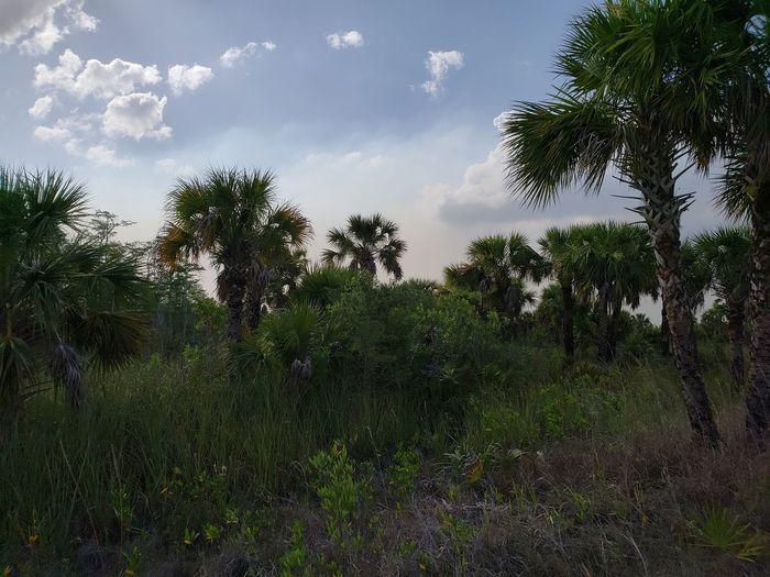Wildlife Everglades  Nature Leaves Green Branch Skyporn Tree Water Sky Grass Cloud - Sky Storm Cloud Treetop Overcast Leaf Vein Growing Weather Atmospheric Mood Summer Exploratorium Visual Creativity EyeEmNewHere