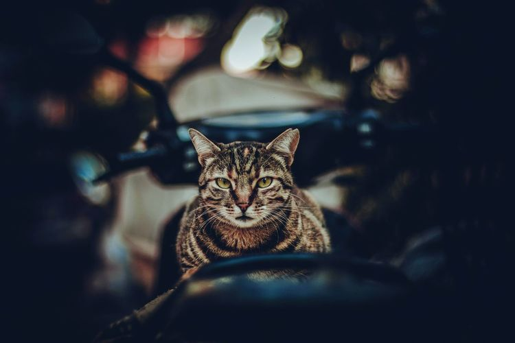 Portrait Of Cat Sitting On Motor Scooter