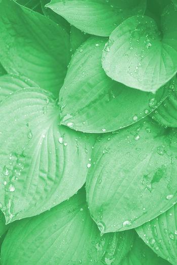Closeup Dew