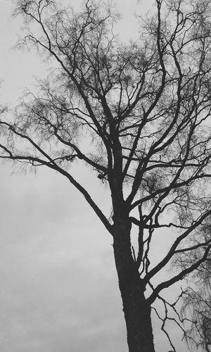 Hugging A Tree Tree