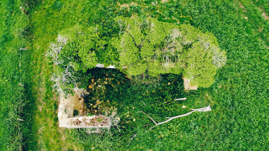 High angle view of trees and plants on land