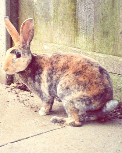 Rabbit In My