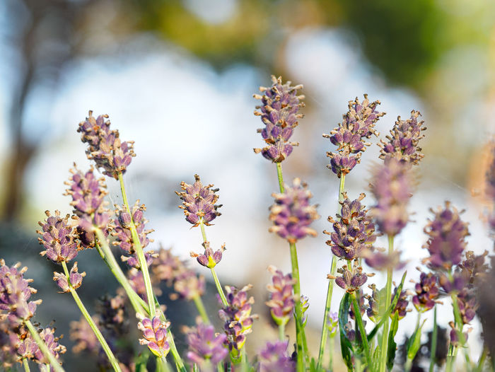 Low angle view of purple flowers
