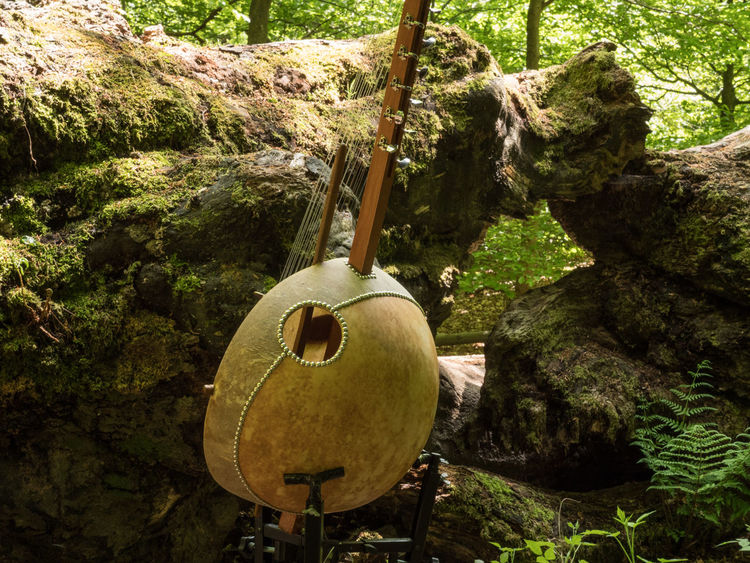 Sababurg-Project with Musician Klaus Latza: Kora African Harp Ancient Woodland Beauty In Decay Beauty In Nature Day Fallen Tree Ferris Wheel Growth Kora Music Musical Instrument Outdoors Springtime Tree Trunk Videoshooting WoodLand Working Hard