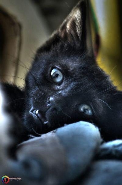 Taked By Me CameraNikon D7000 My Cat my black cat My Lovely Cat