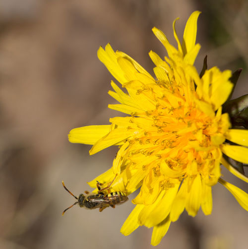 Animal Themes Animals In The Wild Beauty In Nature Close-up Day Flower Flower Head Focus On Foreground Fragility Freshness Growth Insect Nature No People One Animal Outdoors Petal Plant Pollination Yellow