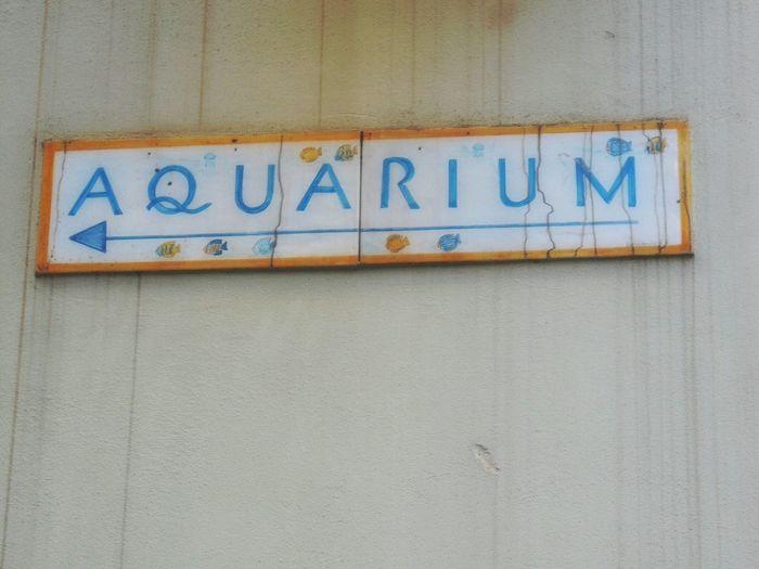 """To the Acquario Di Genova"" And my Zodiacal Sign, too. Indicazioni Piastrelle Cartelli Stradali Ceramics Signs Aquarium Street Photography Walking Around Via Di Pré Genova Italy"