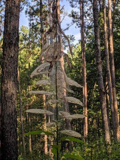Silk Worms Tree