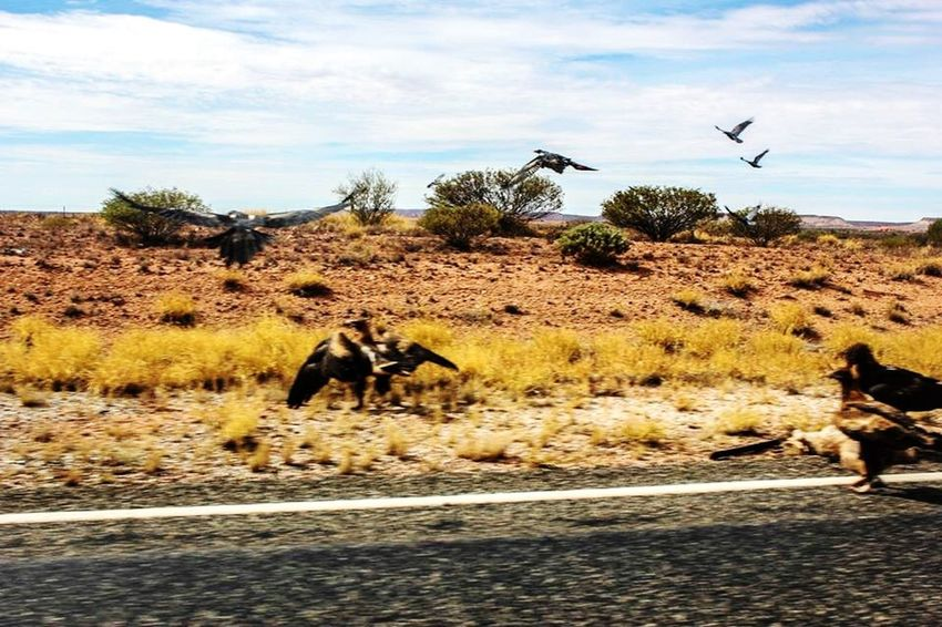 Birds Kangaroo Road Dead EyeEm Nature Lover EyeEm Best Shots Desert Australia EyeEmBestPics From My Point Of View