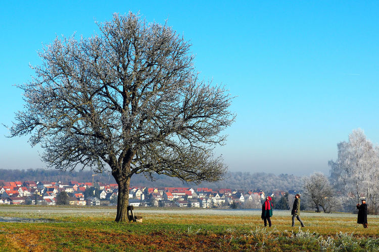 People looking at tree on field against cityscape in winter