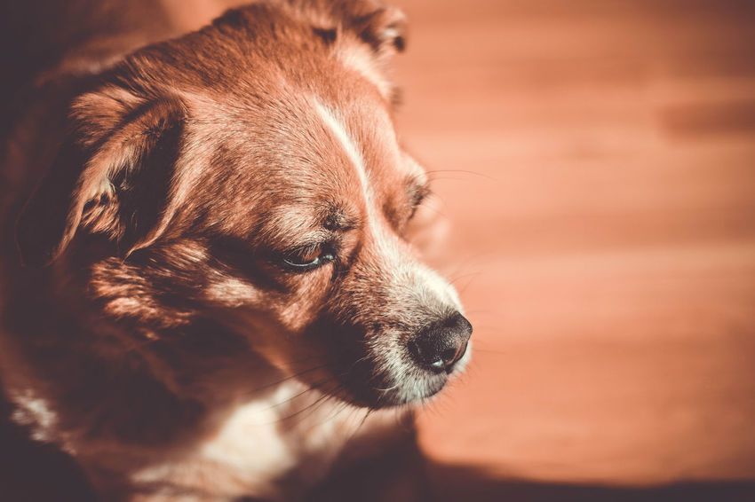 Rocky Animal Themes Beagle Close-up Day Dog Domestic Animals Mammal No People One Animal Outdoors Pets