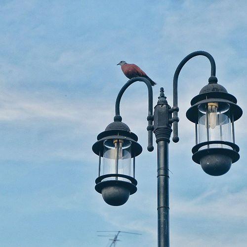 """เคียงคู่...แต่ """" เดียวดาย """" Fujixm1 Fujifilm_xseries Adayinthailand VSCO Vscothailand Igth Vscocamthailand Vscothai Bird Postlamp Sky Lonely"""