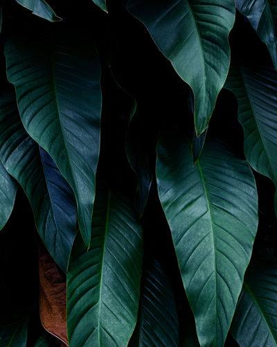 Closeup nature view of green leaf background and dark tone