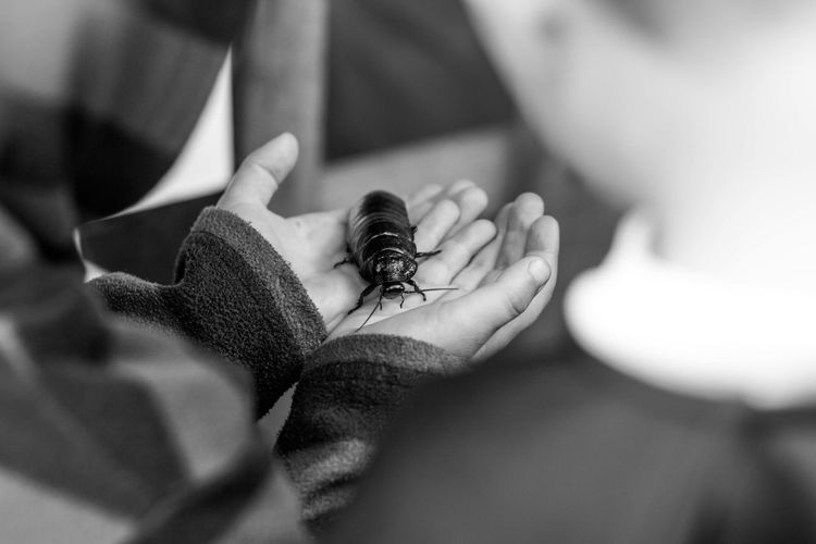 in the hand Animals In The Wild One Animal Animal Wildlife Invertebrate Insect Close-up Human Hand Selective Focus Hand Human Body Part One Person Day Focus On Foreground Holding Finger Human Finger Outdoors Small Cockroach Blackandwhite Monochrome