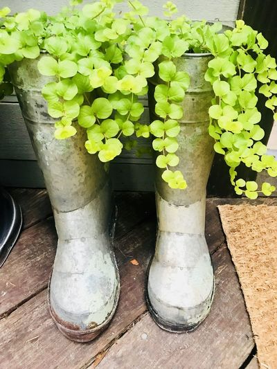Rainboots Metal Boots Creative Gardening Outdoor Decorations Green Decoration Fresh Idea Plant Growth Green Color Nature No People Day Potted Plant Close-up Plant Part Leaf Shoe Outdoors Wood - Material Beauty In Nature Flower Boot Wood Rubber Boot High Angle View