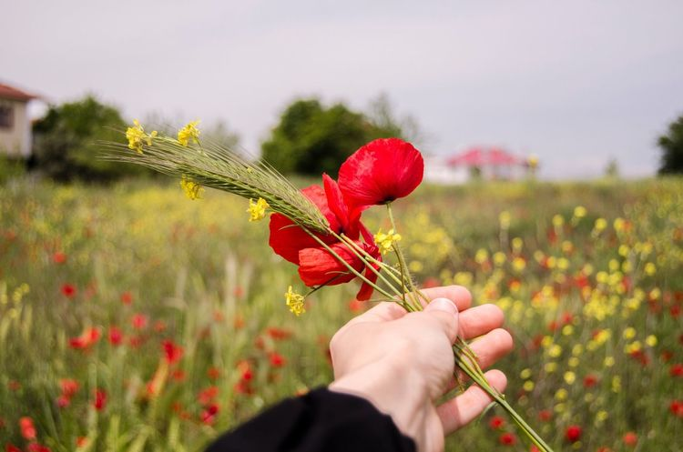 Human Hand Flower Human Body Part One Person Holding Real People Focus On Foreground Red Nature Plant Growth Poppy Close-up Outdoors Beauty In Nature Day Fragility Lifestyles Freshness