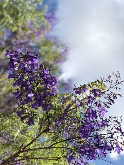 Plant Purple