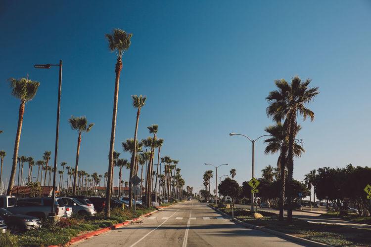 Street Amidst Trees Against Clear Blue Sky