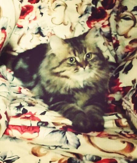 Caty My Cats I Love Cats Cat Couple