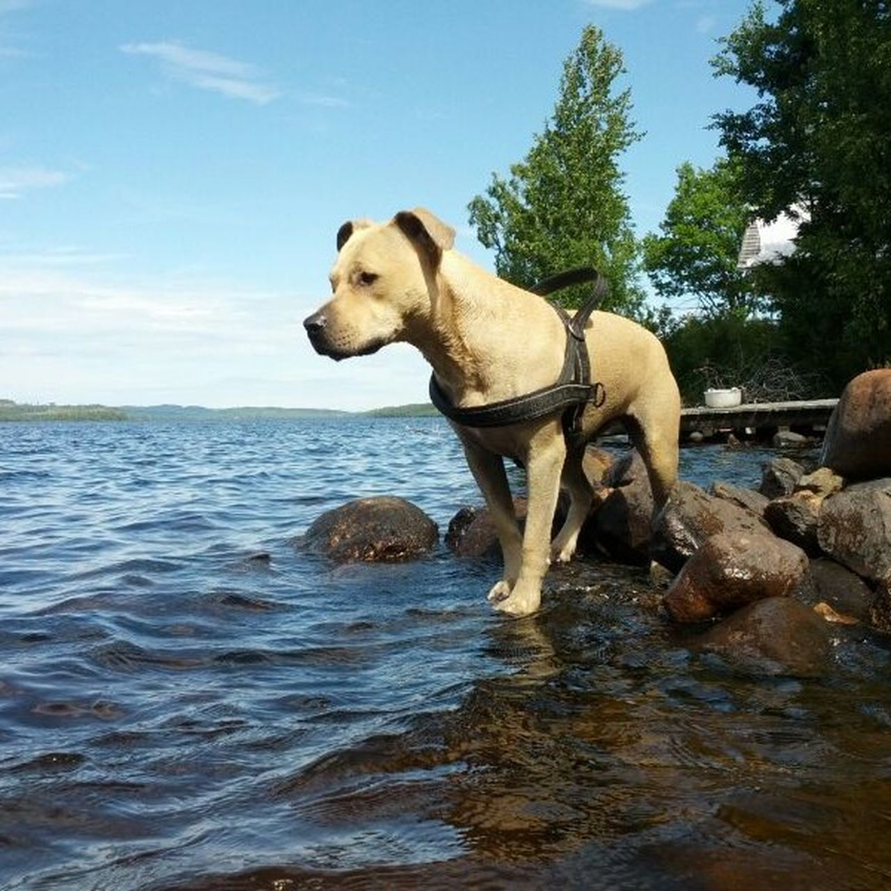 domestic animals, mammal, animal themes, dog, water, one animal, sky, day, outdoors, no people, nature, pets, tree
