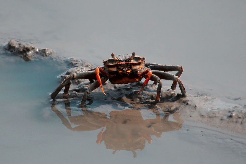 Close-Up Of Crab At Beach
