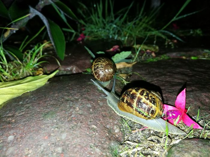 Snail racing Rennes,britany, France Animal Themes Nature Animals In The Wild EyeEm Gallery EyeEm Selects Huawei P9. Night EyeEm Nature Lover Snail🐌 Snail On The Road Snails Adventure Snail Race Snailfriend