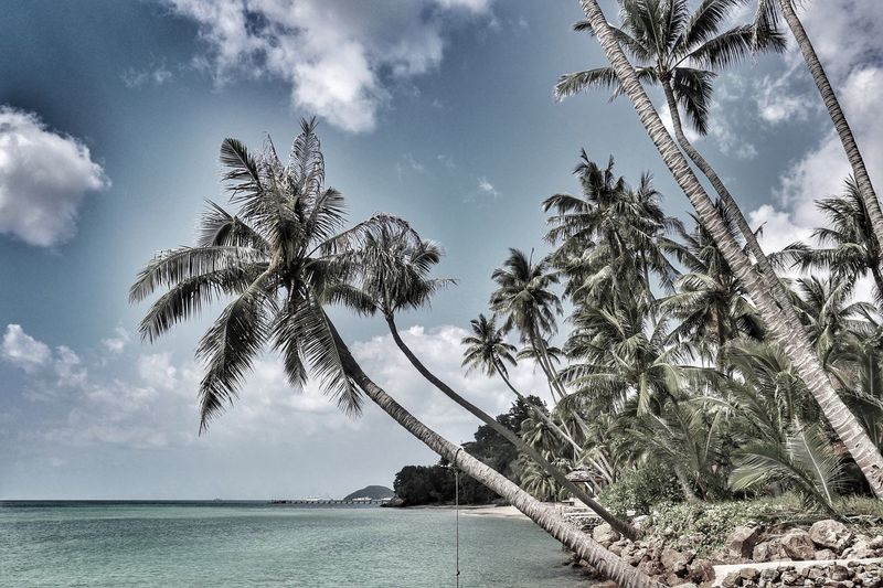 Komsamui Palm Tree Tree Sky Sea Nature Scenics Beauty In Nature Tranquility Tree Trunk Tranquil Scene Cloud - Sky Day Water No People Outdoors Horizon Over Water Beach Growth Ko Samui Ko Samui Thailand Koh Samui