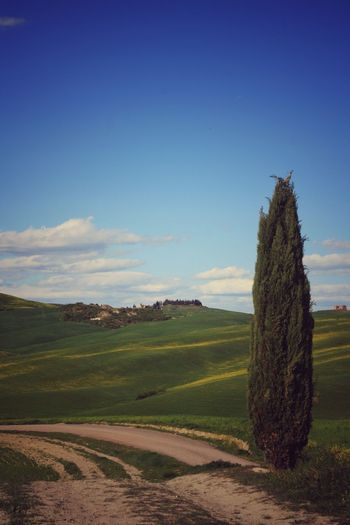Landscape Field No People Tree Nature Beauty In Nature Tranquility Sunlight Rural Scene Outdoors Day Grass Sky Cloud - Sky Travel Destinations Tuscany San Quirico D'Orcia Cypresshill Cypress Trees  Val D'orcia