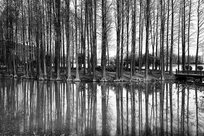 China Photos TreePorn Trees Treepark Bnw Black And White Landscape Lake Nature Water Reflections Reflections Urban Spring Fever Blackandwhite Light And Shadow Streamzoofamily The Great Outdoors - 2016 EyeEm Awards