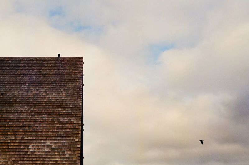 Low angle view of bird on building against sky