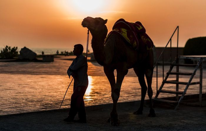Nature Iran Sun Sea Sunlight Camel Kish Island Mammal Sunset Domestic Animals Sky Vertebrate Animal Wildlife Working Animal Nature Domestic One Animal Land Men Full Length Standing One Person Occupation Outdoors Herbivorous Silhouette The Street Photographer - 2018 EyeEm Awards The Photojournalist - 2018 EyeEm Awards