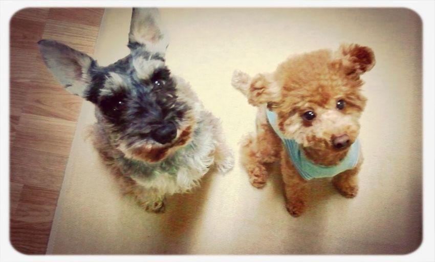 Rin&Yomo. ♡my Babies♡ よもぎ 凛