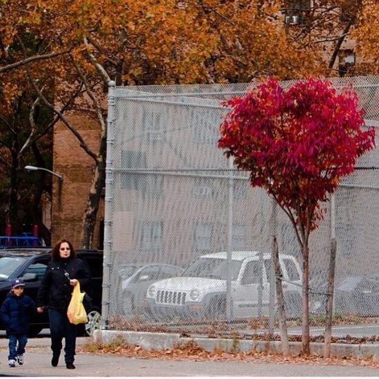 Streetphotograpy NYC