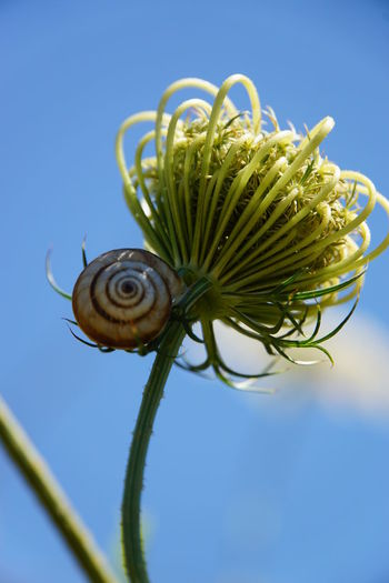 Blue Sky Close-up Day Flower Nature No People No Photoshop One Animal Outdoors Plant Snail Sony A6000 Spiral