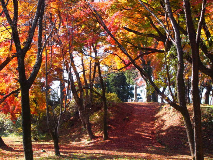 Autumn Beauty In Nature Change Japan Oita Taketa Landscape Leaf Nature No People Outdoors Scenics Tranquil Scene Tranquility Tree