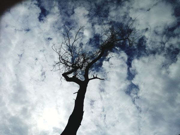 Tree clouds Low Angle View Cloud - Sky Tree Trunk Single Tree Beauty In Nature Outdoors Cloudscape Place Pauparapatt Dharmapuri TN India