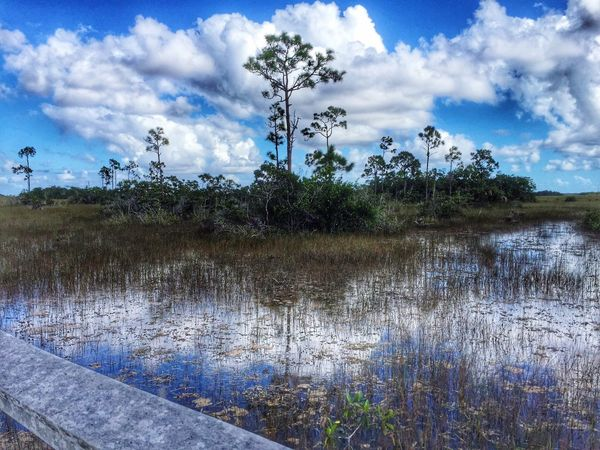 Relaxing Nature Photography Florida Everglades everglades Beautiful evening