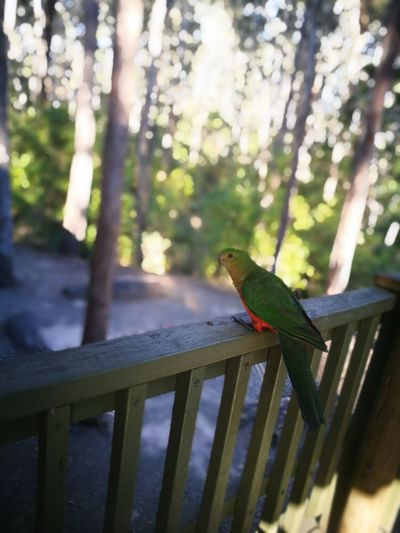 Bird Animal Wildlife One Animal Animal Themes Animals In The Wild Perching Day Multi Colored Nature Outdoors No People
