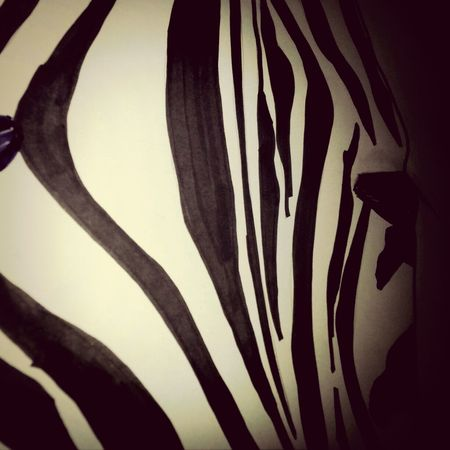 Zebra Hanging Out Taking Photos Check This Out by me