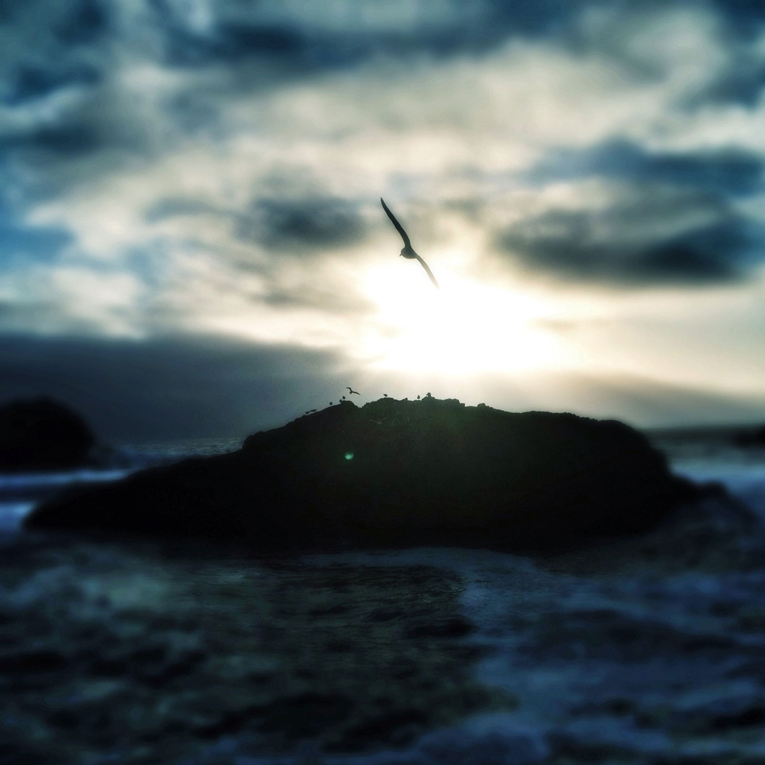 flying, sea, bird, sky, water, scenics, sunset, beauty in nature, animal themes, one animal, animals in the wild, nature, tranquil scene, cloud - sky, wildlife, tranquility, mid-air, outdoors, cloud, idyllic